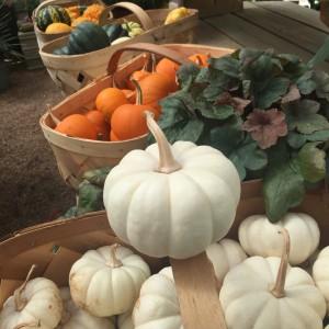 small-pumpkins
