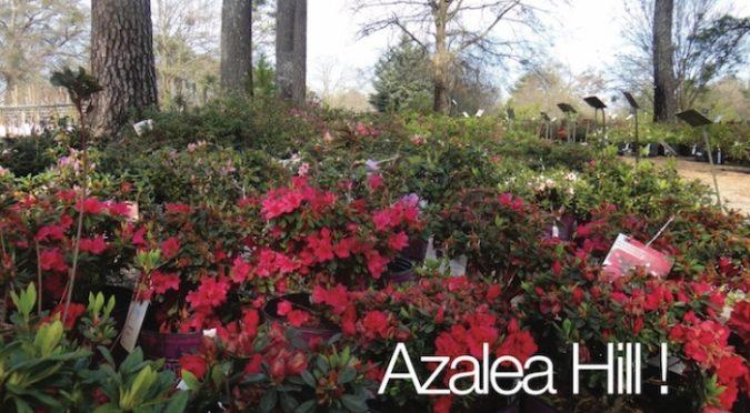 Shade - Crecimiento de plantas perennes y anuales bajo los árboles | Ganadores probados