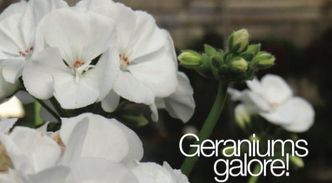 Martin Garden Center U2013 Annuals, Perennials, Herbs, Shrubs, Trees, Living  Centerpieces, Living Bouquets, Martin Nursery And Garden Center U2013 Serving  Your ...
